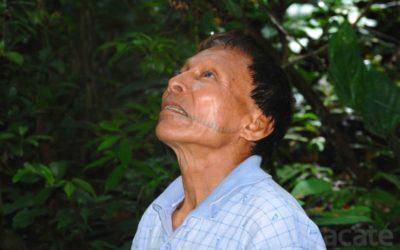 Tribu del Amazonas Peruano crea una enciclopedia de 1000 páginas acerca de su Medicina Ancestral