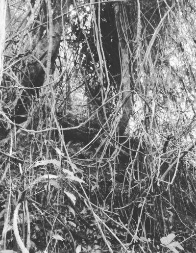 selva-blanco-y-negro