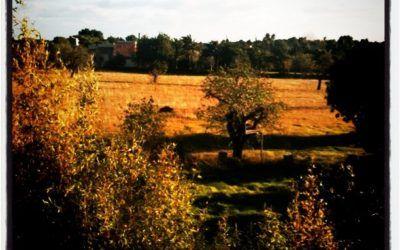 Aturdidos, pero no desgajados: recuperando la Tradición en España